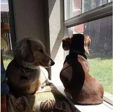 怎么让狗狗自己一个人在家